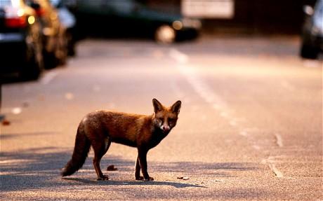 fox_1912751c.jpg